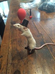 The rodent version of Eddie Izzard.